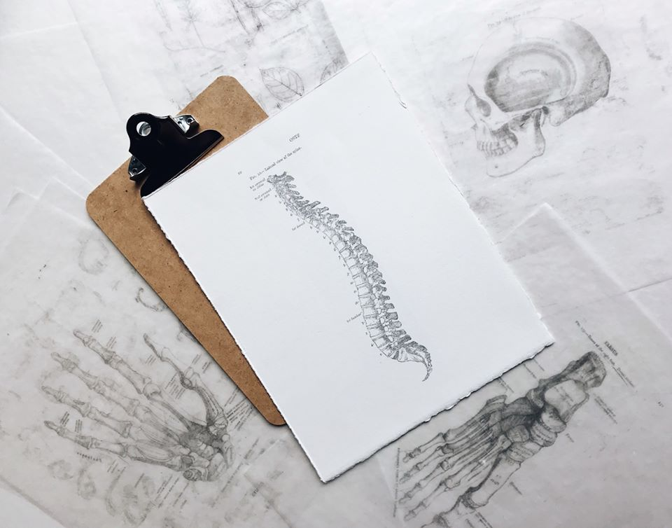 photo of the spine and bones